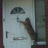 Ce chat est hyper poli : il sonne à la porte avant d'entrer ! (Vidéo du jour)