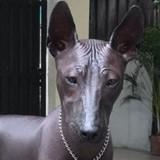 Elle poste une photo de son chien sur Internet et est choquée en recevant des milliers de mails !