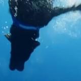 Cette chienne  nettoie les océans  en récupérant les déchets en plastique (Vidéo du jour)
