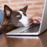 Offrez des repas aux animaux abandonnés grâce au moteur de recherche français YouCare !