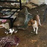 Ils sauvent deux chiens errants, l'un d'eux leur montre quelque chose et c'est le choc