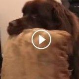 Son chien lui vole son oreiller, elle tente de le récupérer mais... (Vidéo du jour)