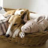 Quel est le meilleur panier pour chien ?