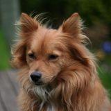 Mon chien perd ses poils : que lui arrive-t-il ?