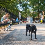 Suite à un trop grand nombre « d'incidents », des squares parisiens interdisent l'accès aux chiens