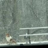 Cette chienne seule attend tous les jours au même endroit, une femme s'approche et réalise l'horrible vérité