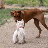 De la viande piégée servie aux chiens de Florange