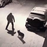 Ivre, il veut donner un coup de pied à un chien et se prend un magnifique retour de karma (Vidéo)