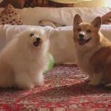 Quand des chiens reprennent le tube de Tegan and Sara (Vidéo du jour)