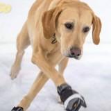 Destiné à l'euthanasie, ce chien a surpris sa maîtresse en devenant le roi du patin à glace (Vidéo)
