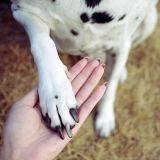 Approcher un chien inconnu : quel comportement adopter ?