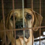 Retrouvé dans une cage les pattes tordues, ce chien se remet doucement (Photos)