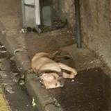 Effroyable : un chien retrouvé mort, pendu à un poteau