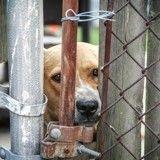 Une pension pour chiens et chats soupçonnée de maltraitance dans les Yvelines