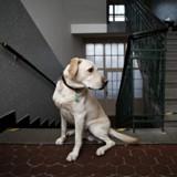 Mon chien tourne en rond dans la maison : pourquoi, et que faire ?