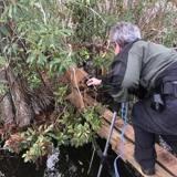 Urgences dans les marécages : pour sauver un chien des alligators, elle fait l'inimaginable !