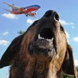 Un chien perdu par une compagnie aérienne lors d'un transit