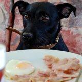 Le petit déjeuner, un repas important pour les chiens aussi !