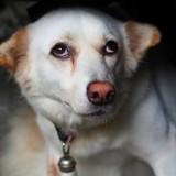 44 chiens découverts chez une cinquantenaire souffrant du syndrome de Diogène