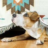 Mon chien a peur des feux d'artifice, comment l'aider ?