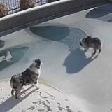 Il regarde ses 2 chiens dans le jardin enneigé : tout à coup, un terrible accident se produit (Vidéo)