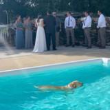 En plein mariage, le chien saute dans la piscine et choisit le pire endroit pour se sécher !