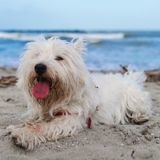 « Ils partent avec nous » : 3 conseils incontournables pour que votre animal passe de bonnes vacances (avec ou sans vous)