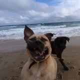 """10 photos """"ratées"""" des chiens les moins photogéniques du monde"""