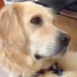 Ce chien entend un chiot pleurer et a une réaction bouleversante (Vidéo du jour)