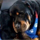 Les images bouleversantes d'un chien pleurant la mort de son frère