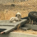 Elle sauve des chiens abandonnés sur la route, le vétérinaire fait une annonce inattendue !