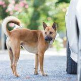 Pourquoi les chiens font-ils pipi sur les roues des voitures, et comment l'éviter ?