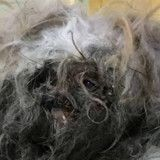 Ce chien ressemblait à peine à un chien il y a 10 jours, aujourd'hui il est méconnaissable !