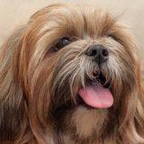 10 chiens qui auraient bien besoin d'un bon coup de brosse (Photos)