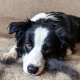 Poils ternes, chute de poils, pellicules… Comment rendre un beau pelage à mon chien ?