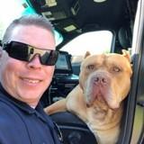 Les policiers reçoivent un appel au sujet d'un chien dangereux, sur place ils n'en reviennent pas