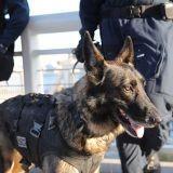 Un chien policier tué ce matin durant l'assaut à Saint-Denis