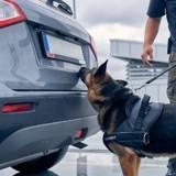Les gendarmes arrêtent une voiture et leur chien trouve quelque chose d'inattendu dans le caleçon du passager !