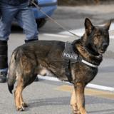 Un adolescent de 15 ans placé en garde à vue après avoir frappé un chien policier avec une pierre