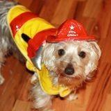 Un chien sauve une famille des flammes