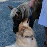 Elle filme son chien avec un poney qu'elle vient de sauver, la vidéo fait le tour du web