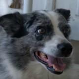 Ses chiens tentent de se lier d'amitié avec un porc-épic, mais rien ne se passe comme prévu (Vidéo)