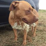 Un chien gravement blessé par un porc-épic sauvé par les internautes !
