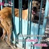 Ce chien était coincé dans un portail, et seul un humain pouvait l'aider (Vidéo du jour)