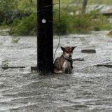Tempête Harvey : un chien abandonné attaché à un poteau au milieu des inondations