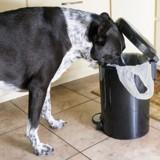 Ce chien participe au #Trashtag challenge pour ramasser les déchets de son quartier