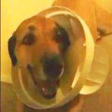 Voici LE chien coupable ! (Vidéo du jour)