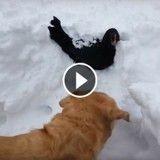 Un chien altruiste sauve la vie de deux poules coincées dans la neige (Vidéo du jour)