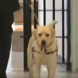 Le soldat se rend dans une prison avec son chien, ce dernier fonce vers une prisonnière qui fond en larmes