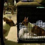 Prison Break, avec des chiens (Vidéo du jour)